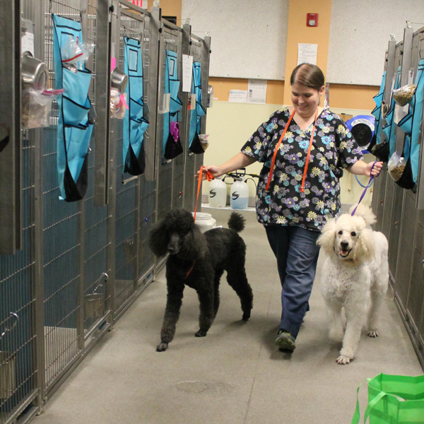 Tampa Dog Boarding Bayshore Pet Resort
