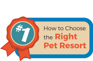 How to Choose the Right Pet Resort