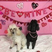 Puppy Love Valentine's Day Party